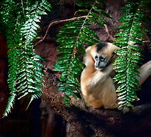 A sad looking gibbon just hanging on by alan shapiro