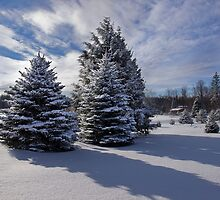 Snow Laden Trio by Kathy Weaver