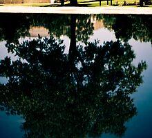 Reflection Pool by Sharlene Rens