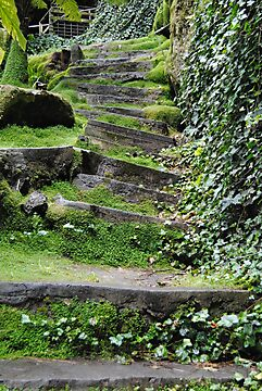 200yr old stone steps - Umpherston Sinkhole - Mt Gambier, South Australia by Heather Samsa