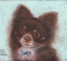 Harley Dean, long-haired Chihuahua by Hilary Robinson