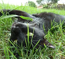 Shorty rolling in the grass by DashTravels