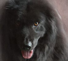 Portrait of Ralph by Chris Armytage™