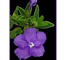 Purple Flower by TGrowden