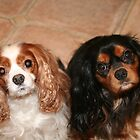Brother and Sister ~ Cavaliers King Spaniels by daphsam