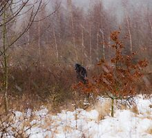 Winter Storm by CJTill