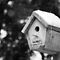 Bird House for Rent by Mark Van Scyoc