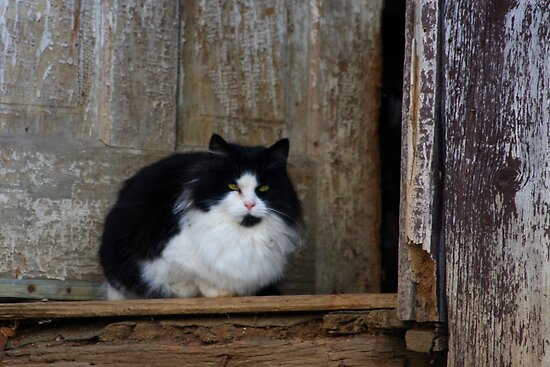 Orphaned - Barn Cat by Tony Wilder