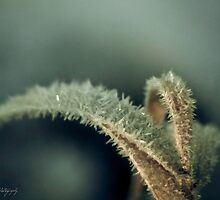 Frosted by Annie Lemay  Photography