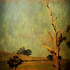 The dead tree ... by Chris Armytage
