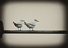 Two Little Dickie Birds by inkedsandra