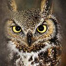 ***ONLY OWLS***