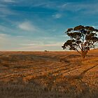 Evening Tree by Paul Thompson