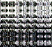 DSCN0034 _GIMP _XnView by Juan Antonio Zamarripa