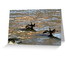 Cormorants drying their wings in Boulogne, France Greeting Card