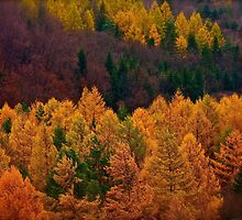 Wonder's of autumn colors  - Poloniae Alpe Besczade . by Brown Sugar - Mr.Medicine . F** Favs  (8) . Views (460) ). Thank you a bunch friends !    by © Andrzej Goszcz,M.D. Ph.D