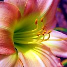 Lily # 9 by Mattie Bryant