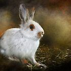 Woolie the Snowshoe Hare by Kay Kempton Raade