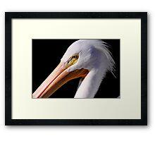 White Pelican Portrait Framed Print