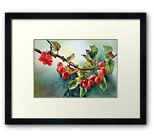 Crab apples after rain Framed Print