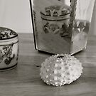 shell,wood,vase,jar by White Owl