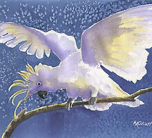 Cuckoo Cockatoo by Marsha Elliott