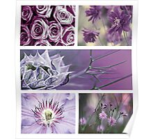 Collection ~ Purple Flowers Poster