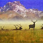 big sky bulls  by R Christopher  Vest
