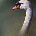 mute swan study by R Christopher  Vest