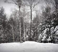 Inside the Blizzard of 2011 by smalletphotos