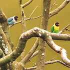 Pretty Lovebirds by Sharlene Gray