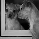 Doggie in the Mirror by Doty