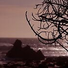 Tree Silhouette at Sunset by tom j deters