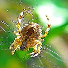Fractalius Spider by Trevor Kersley