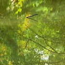 Reflections, pond, Ashtead Park, I by physiognomic