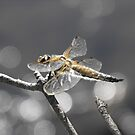 Dragonfly Bokeh by Tracy Faught