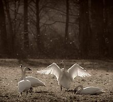 A NEW YEARS  DAY (sepia ) by Sandy Stewart