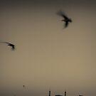 City Birds by Dragomir Vukovic