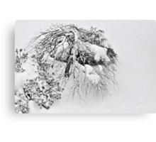 Shaggy Snow Dog Canvas Print