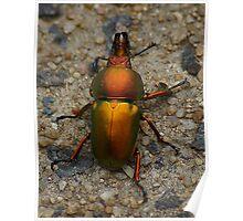 Christmas beetle Poster