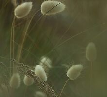 rabbit tails and grasses..... by David Murphy