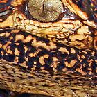 Gator eyes! by jozi1