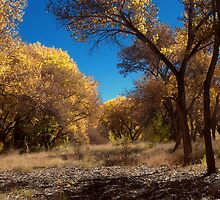 Bosque Gold 1 by Karl Eschenbach