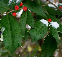 Snow & Holly-Red, Green, White by Karen L Ramsey