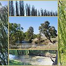 Coolaburragundy River COOLAH NSW by Julie Sherlock