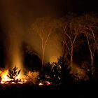Trees by firelight by mhall