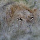 Grassy Mane by Donald  Mavor
