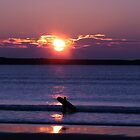 sunset surfer by Jean O'Callaghan