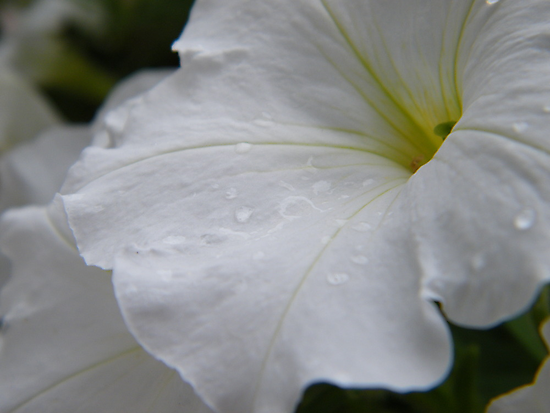 Dew on white flowers by Graham Beatty