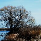 Point Pelee, Ontario by Graham Beatty